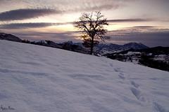 Orme (Andrea Morico) Tags: sunset snow tree landscape nikon tramonto tokina1224 tokina neve footsteps montagna 1224 orme d90