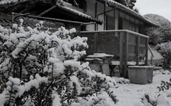 12089 (tigermilk0808) Tags: bw film japan hiroshima contax 400  kodakbw400cn   carlzeiss