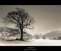 Langdale Tree (.Brian Kerr Photography.) Tags: winter snow tree lakedistrict cumbria langdale briankerrphotography bestcapturesaoi