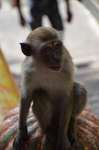 Monkey Business 4 ©  Still ePsiLoN
