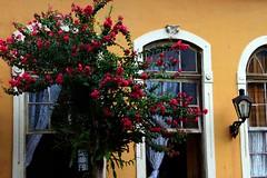 72434_TADEU NASCIMENTO_MORRETES PARANA (Tadeu_Nascimento) Tags: paraná janelas vegetação morretes flôres tadeuonascimento