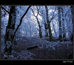 Winter Woodland. (Picture post.) Tags: trees winter green nature landscape interestingness woods frost paysage arbre soe mygearandme mygearandmepremium mygearandmebronze
