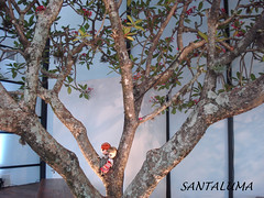 Pose na árvore dentro da sala de palestras!!