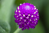 Purple Flower (Joshua Drew Vaughn) Tags: china flower macro asia purple 创意 中国 有趣的 小 宏
