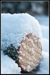 Snowed (mmoborg) Tags: winter snow cold kyla vinter sweden sverige snö 2012 mmoborg mariamoborg
