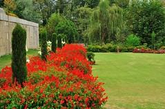 Lawns of Nishat bag,Srinagar,Kashmir, India. (draskd) Tags: flowers gardens is kashmir srinagar nainital jk lawns dallake touristspots naturephotos travelphotos fallseason nishat mughalgardens finepics kashmirtourism nishatbag draskd