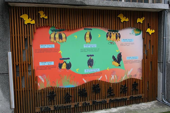 雲林水林黃金蝙蝠生態館(誠正國小)0035