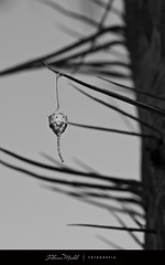 The weird bug hanging little house (Fabricio Micheli) Tags: blackandwhite palm palmera agujas espinas