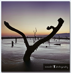 of dead trees and misty mornings.. (PNike (Prashanth Naik..back after ages)) Tags: morning trees sea sky india beach misty sunrise nikon asia purple roadtrip hills maharashtra tones harihareshwar konkan d7000 pnike