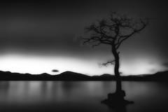 The tree that never changes.. (lordoye) Tags: longexposure blackandwhite silhouette scotland lochlomond gnarled bwfilter treebones balmaha neutraldensityfilter nd110 millarochybay