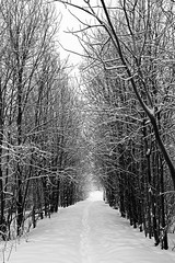 Winter wonderland (pelnit) Tags: trees winter bw snow norway norge blackwhite vinter sn trr nittedal svarthvitt pelnit