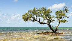 Dreaming of Warmer Places (Robby Ryke) Tags: ocean tree keys island florida dream keywest tropics sevenmilebridge