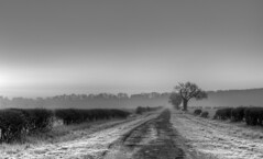East Stoke (djshoo) Tags: nottingham trees england landscape blackwhite lowlight frost newark d90 nikond90