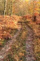 Ashdown Forest (Susan SRS) Tags: uk november autumn trees england leaves yellow canon sussex woods colours pathway ashdownforest photomatix tonemapped dpp0009tonemapped