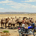 Lost in the Gobi - an early encounter with a herding family