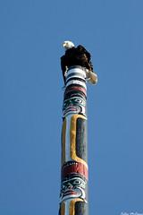 Eagle on Totem (C McCann) Tags: park canada bird birds spring day bc eagle britishcolumbia hill bald totem victoria pole vancouverisland american westcoast beacon watchtower avians