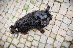 Easter in Penela da Beira (Gail at Large | Image Legacy) Tags: dog portugal 2014 gailatlargecom peneladabeira easter2014