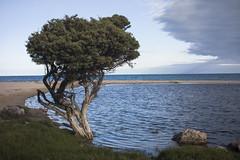 Hindmarsh River estuary (thoughtfactory) Tags: colour digital landscape imac handheld 5pm victorharbor fleurieupeninsula leicasummicron35mmf20asph garysauerthompson novoflexadaptor lightroom5 sonynex7 hindmarshriverestuary