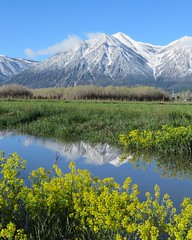 Carson Valley Magical Beauty (claypeoples) Tags: california mountain west reflection water nevada sierra wildflower explored