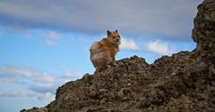 4mai_Thorbjorn_062 (Stefn H. Kristinsson) Tags: dog mountain dogs iceland spring hiking may ma vor hundur sland ganga fjallganga tamron2875mm grindavk hundar grindavik orbjrn nikond800 thornbjorn orbjarnarfell