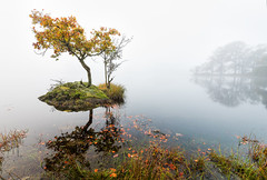 Lonely (Pete Rowbottom, Wigan, UK) Tags: uk autumn england mist reflection tree nature water leaves weather fog sunrise landscape dawn still moody bright britain rydal lakes lakedistrict earlymorning peaceful wideangle autumncolours reflected cumbria serenity attractive serene colourful atmospheric ambleside windermere lonetree thelakes waterscape waterreflections thelakedistrict rydalwater northwestengland uklandscape nikon1635f4 peterowbottom nikond750