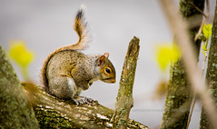 The Praying Little Squirel-2 (saswatibhoi) Tags: cute animals nikon little praying squirel nikonphotography nikond5300