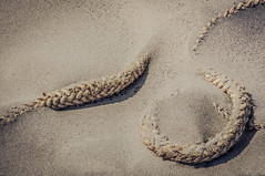 Found Item (Roberto Braam) Tags: old holland beach netherlands dutch strand coast photo sand nikon scenery europa europe image outdoor dunes picture thenetherlands sable scene rope coastline capture duinen touw zand duin kust d300s robertobraam