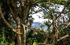 D'un seul coup de pattes et hop! du bois pour cet hiver... (Crilion43) Tags: france nature canon divers centre arbres cher nuages paysage pierrot sapin oiseaux herbe bleue piaf msange rflex femelle charbonnire moineaux mle thuya