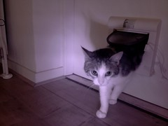 20160523-103242-i-1 (Catflap central) Tags: cat catdoor katzenklappe raspberry pi camera cats catflap kattenluik catflapj2nnl pet meow