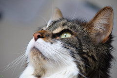 20160522-D7-DSC_1754.jpg (d3_plus) Tags: cats animal japan cat nikon bokeh daily telephoto  tele nikkor  kanagawa dailyphoto  70210 thesedays  70210mm  70210mmf4    70210mmf4af 702104 d700 nikond700 aiafnikkor70210mmf4s 70210mmf4s