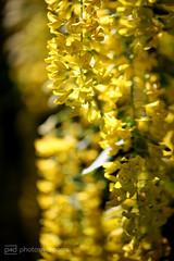 in my secret garden - 4 (photos4dreams) Tags: flower macro blume makro secretgarden photos4dreams photos4dreamz p4d