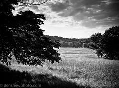 img265a (Ben.d.s) Tags: park trees sky blackandwhite bw white black art mamiya film nature mediumformat landscape washington 645 kodak valley medium format forge 160vc portra portra160vc valleyforgepark mamyia645