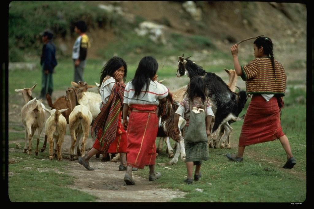 Fillettes gardant un troupeau de chevres (region de Nebaj)