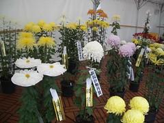 IMGP2076 (naohisa1971) Tags: flower niigata bandai
