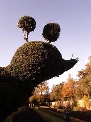 Big bird (col&tasha) Tags: uk autumn house bird hotel topiary peacock national trust grounds cliveden flickrandroidapp:filter=none