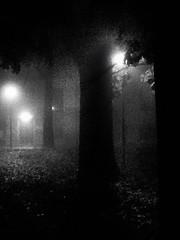 ... nell'ombra sussurrante dei giardini appassiti ... (UBU ) Tags: blancoynegro blackwhite noiretblanc kodak blues dreams poesia notte biancoenero blunotte blupolvere ubu blutristezza unamusicaintesta landscapeinblues bluubu luciombreepiccolicristalli