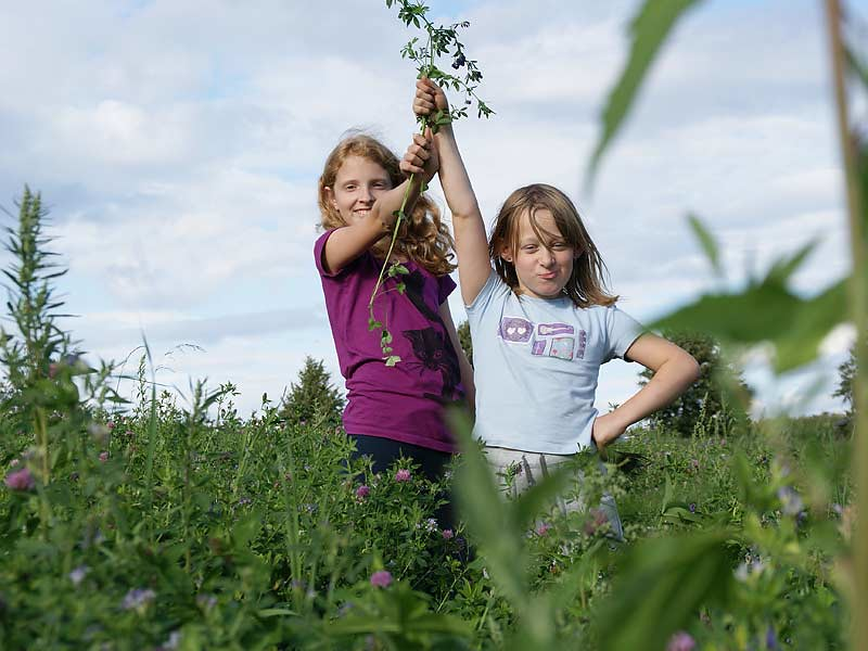 Kirschblütenhof - Mädchen auf dem Feld