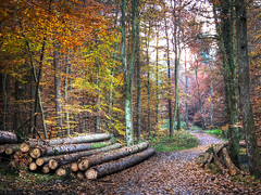 In the autumn Forest (Habub3) Tags: park wood travel autumn light holiday plant tree fall nature colors leaves forest canon germany deutschland licht reisen flora europa europe stuttgart path urlaub laub herbst natur blatt holz wald sreet baum hdr bunt vacanze weg g12 2011 strase viewonblack habub3 mygearandme