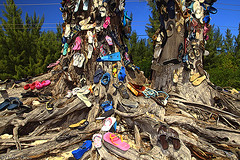 Cayman Shoe Tree (D. Photos) Tags: tree shoes sandals bluesky footwear flipflops caribbean cayman slippers sigmalens debbiephotos colorfulfootwear canon60dcamera caymanshoetree caymanislandshoetree