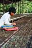 Mengais Rejeki (Saya Duta Sinarmas) Tags: gogreen sinarmas penghijauan mengaisrejeki sayadutasinarmas tanampohon sinarmasforestry
