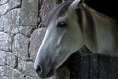 uno gallego (antoniofmg) Tags: espaa horse animal animals caballo spain espana galicia animales carnota