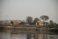 chalets? #1 (parth joshi) Tags: morning birds river random delhi pollution winters musings boattour yamuna brownheadedgull nigambodhghat