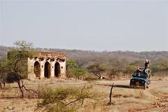 Ranthambhore Jeep Safari (Lou Morgan) Tags: india asia jeep tiger safari louise morgan gypsy rajasthan ranthambhore