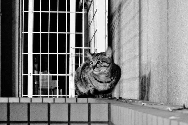 Today's Cat@2011-12-15