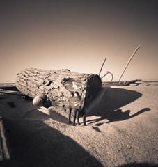 The Adventures of Clara D. Camel - Chapter 20 {Two Sisters - Epilogue} (EssGee Photography) Tags: park travel shadow blackandwhite bw ny newyork 120 film beach analog mediumformat jones blackwhite sand humorous shadows desert kodak humor tourist longisland pinhole shore dreams vignetting vignette zero2000 emotive jonesbeach ektar ektar100 claracamel