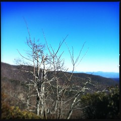 Skeleton Tree, Western North Carolina (ibkc) Tags: trees sky mountains nature landscape decay northcarolina squareformat loftus iphone4 iphonephotography iphoneography hipstamatic