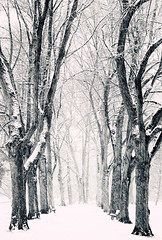 Snow Storm (Philipp Klinger Photography) Tags: park christmas xmas schnee trees winter bw white snow storm black tree nature weather germany weihnachten landscape deutschland louis blackwhite alley nikon bravo hessen frankfurt row neve snowing fro philipp depth frankfurtammain stadtpark allee hesse hchst ffm sturm klinger nige hchster d5100 hchster