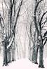 Snow Storm (Philipp Klinger Photography) Tags: park christmas xmas schnee trees winter bw white snow storm black tree nature weather germany weihnachten landscape deutschland louis blackwhite alley nikon bravo hessen frankfurt row neve snowing frío philipp depth frankfurtammain stadtpark allee hesse höchst ffm sturm klinger niège höchster d5100 höchsterstadtpark tieflouis