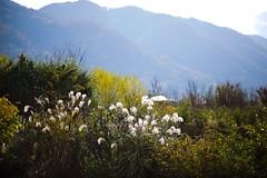 Hiking trail on Mt. Ikoma (ebiq) Tags: nikon mt hiking 85mm trail if af nikkor ai ikoma f14d d700
