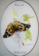 My Art  - Painted lady (Mick E. Talbot) Tags: vanessa lepidoptera animalia arthropoda paintedlady vanessacardui insecta nymphalidae papilionoidea distelfalter taxonomy:class=insecta taxonomy:order=lepidoptera taxonomy:family=nymphalidae